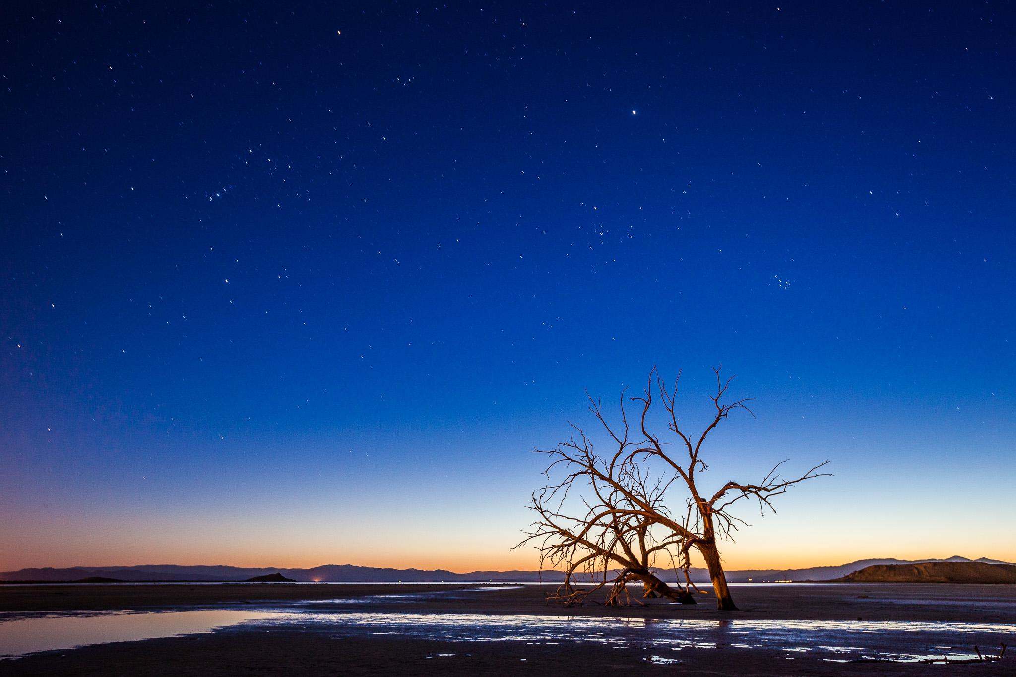 Salton Sea Tree